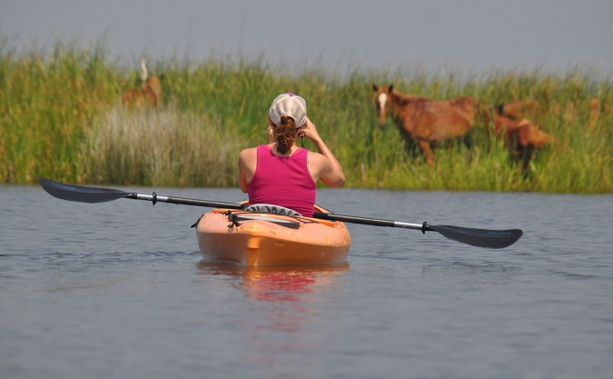 Kayaking with Wild Horse, Outer Banks